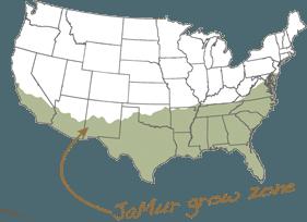 Jamur Growzone