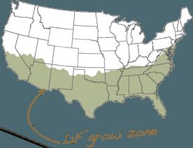 L1F Growzone