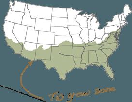 T10 Growzone