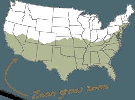 Zeon Growzone