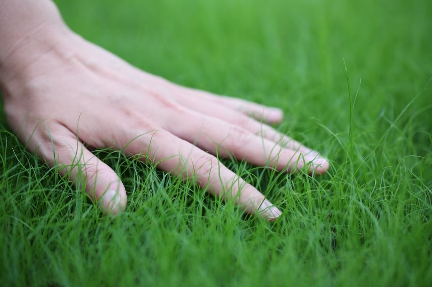 Hand touching TifBlair Centipede grass