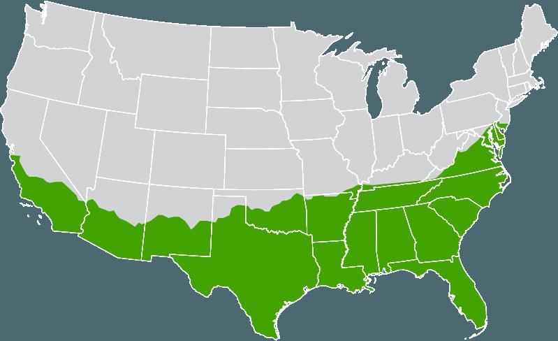 zone map-jamur