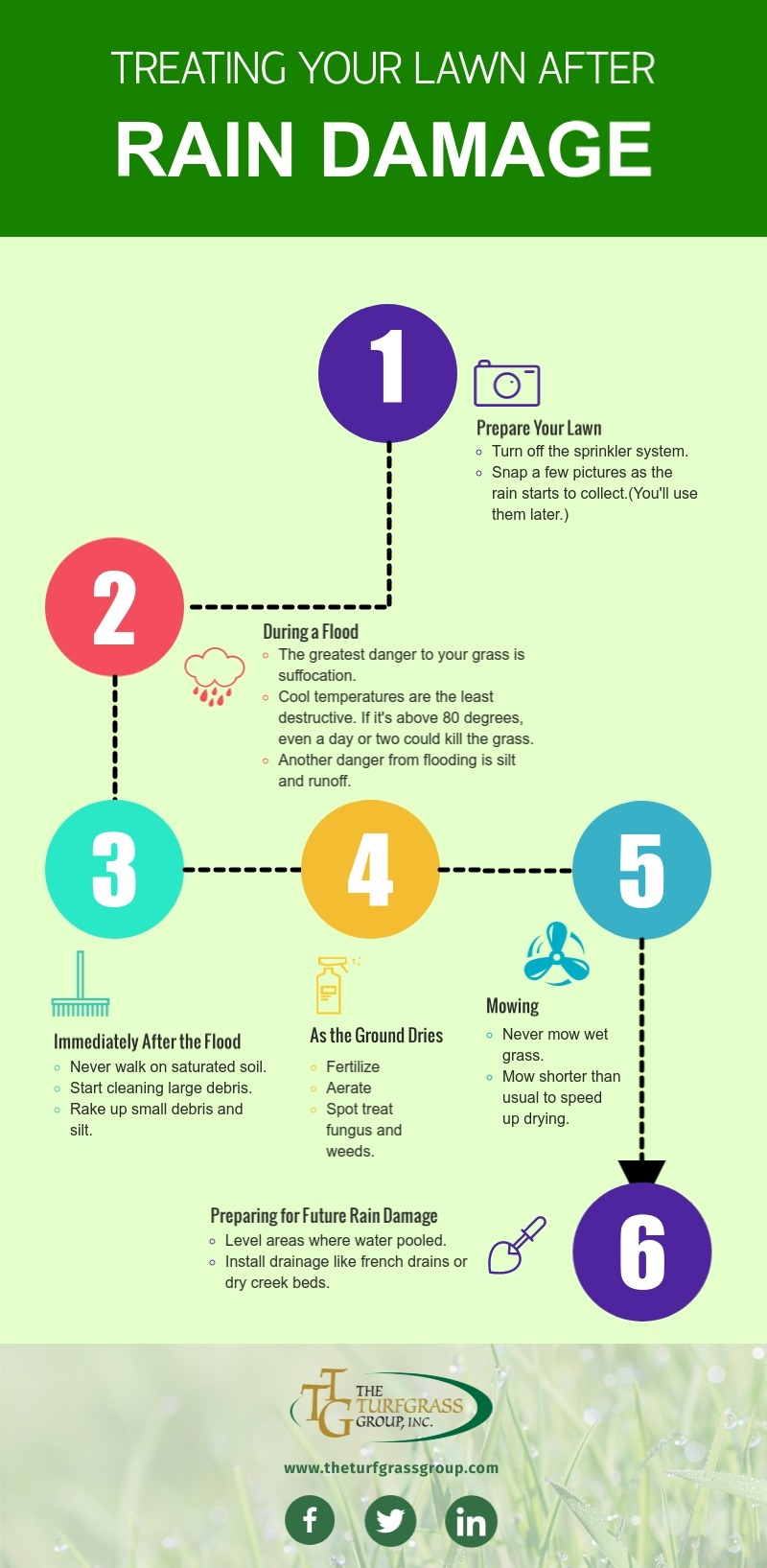 Treating Your Lawn After Rain Damage [infographic]