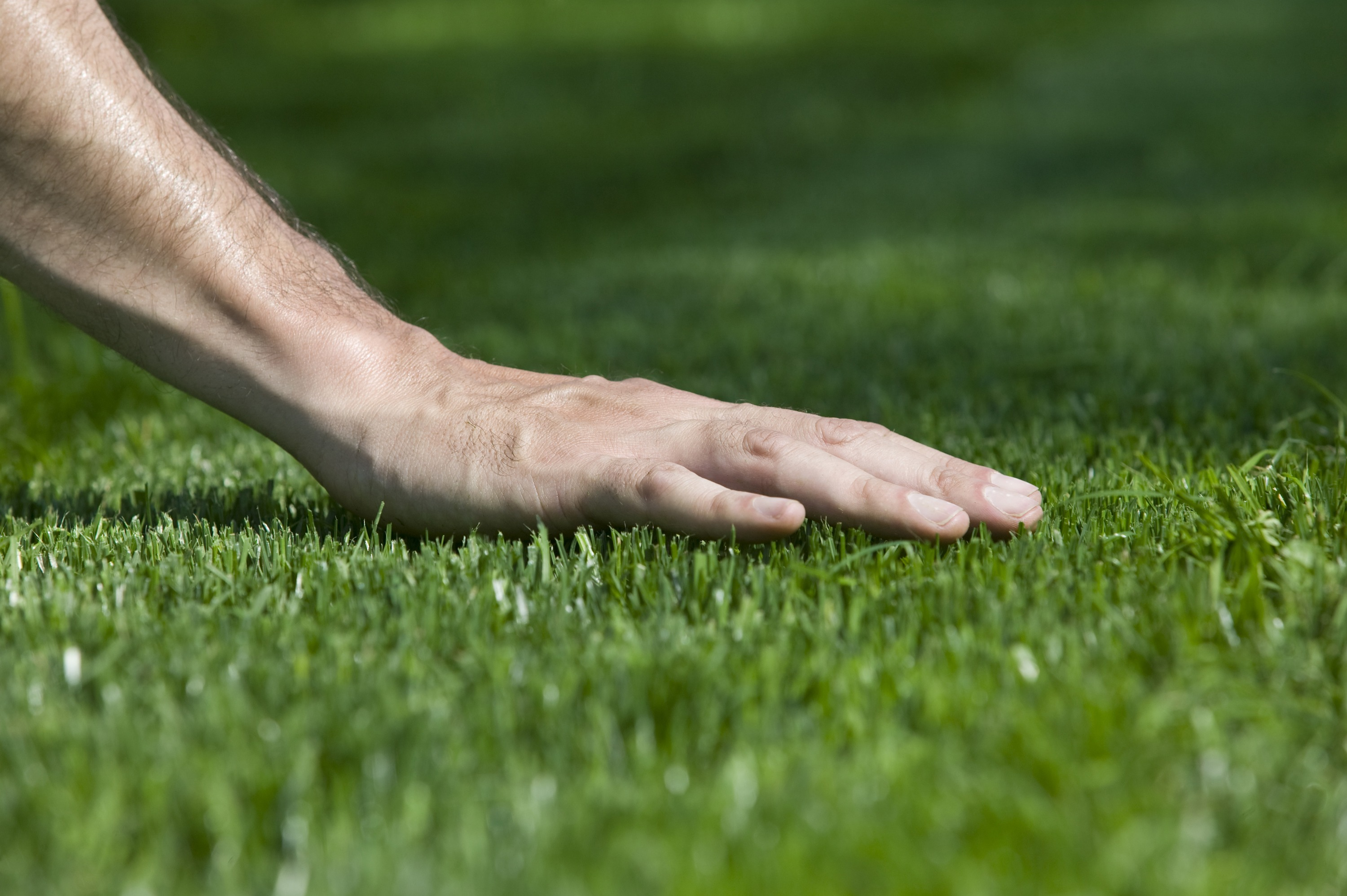 A hand touching the freshly cut grass