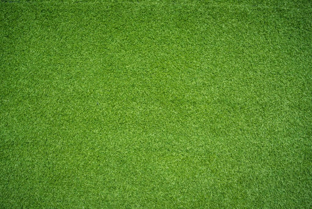 33692482 - green grass