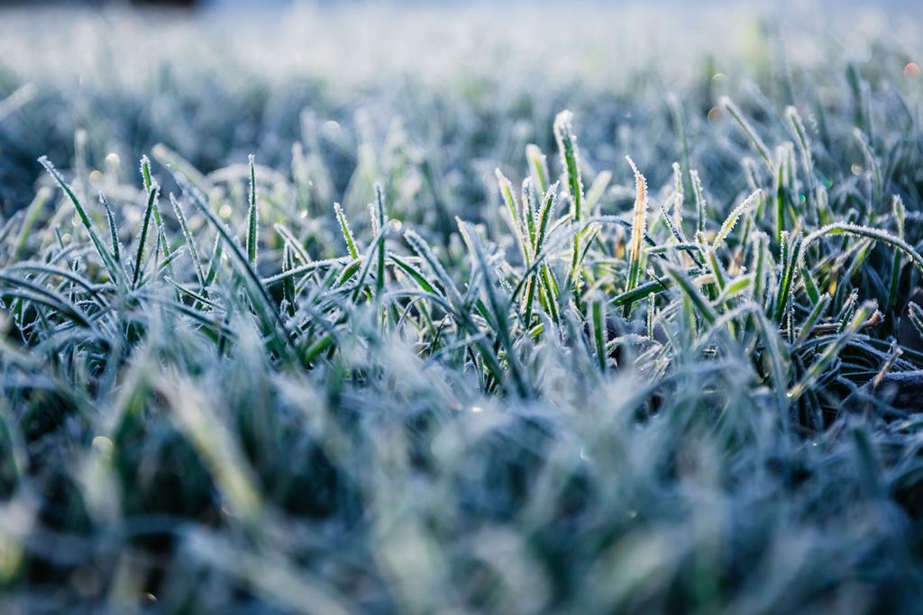 Why Your Grass Died Over Winter