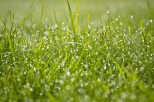 Tips for a Sustainable Lawn