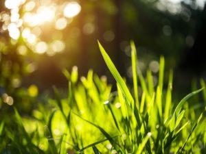 Cool Season vs. Warm Season Grasses