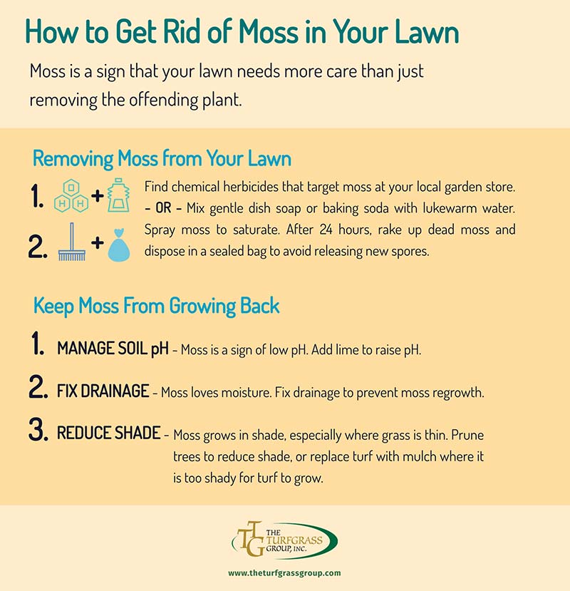 How to Get Rid of Moss in Your Lawn [infographic]