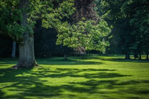 What is the Best Turf for Shade