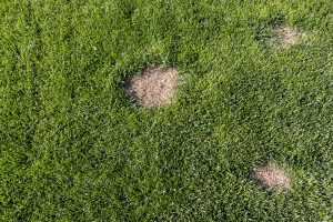 How to Fix Dead Spots in Bermudagrass