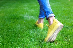 How to Maintain a High-Traffic Lawn