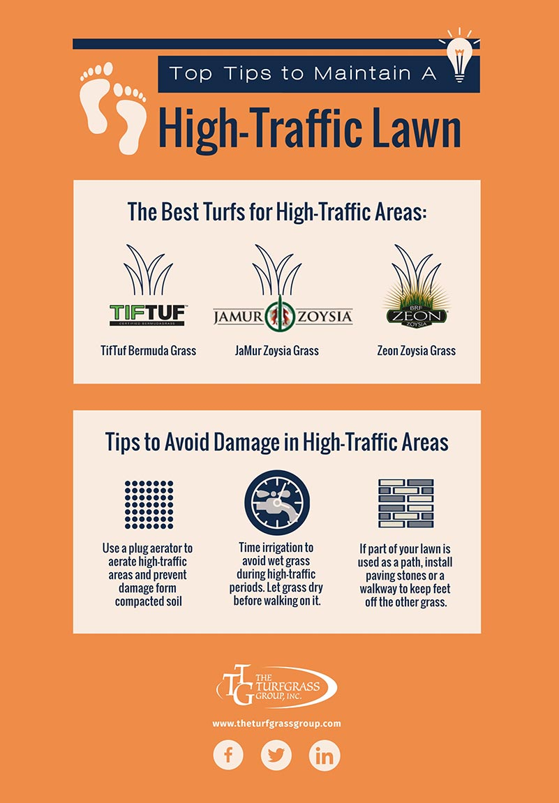 How to Maintain a High-Traffic Lawn [infographic]