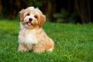 How to Prevent Dog Urine Spots on Your Lawn