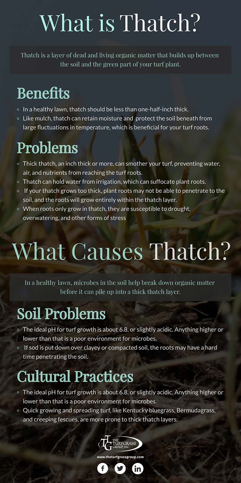 The When Why and How of Dethatching Your Lawn [infographic]