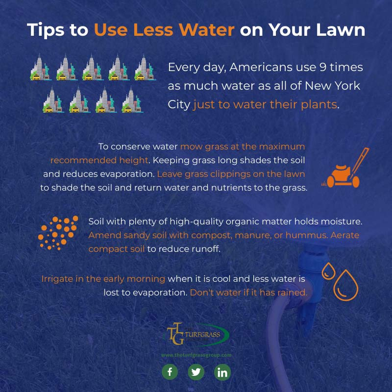 How to Use Less Water on Your Lawn [infographic]