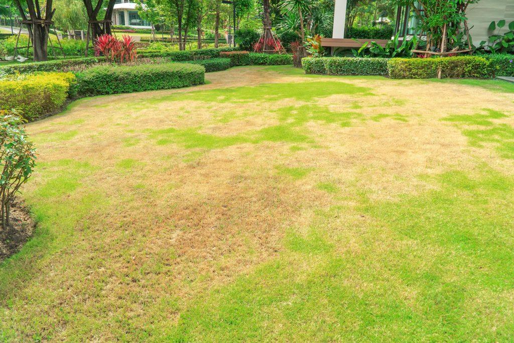 Reviving a Dead Lawn