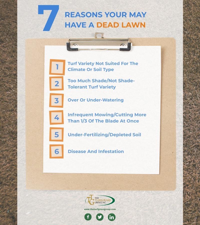 Reviving a Dead Lawn [infographic]