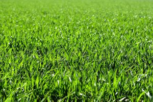 8 Ways to Keep Your Lawn Green