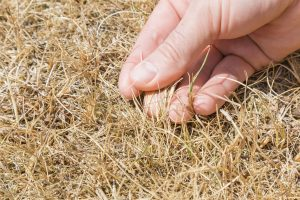 Caring for Your Lawn Before, During, and After a Drought