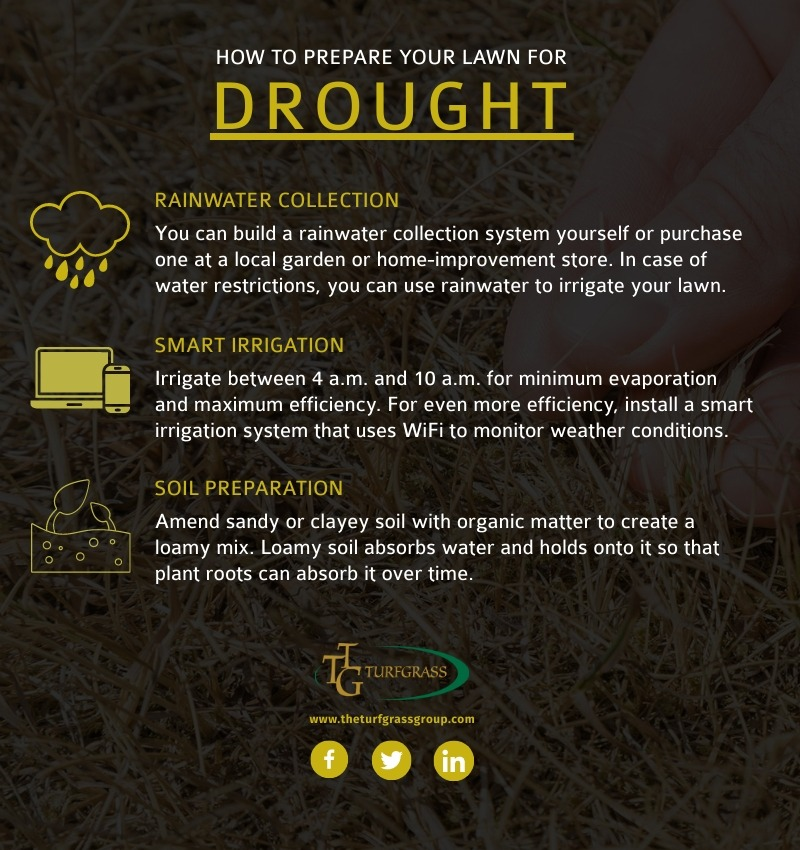 Caring for Your Lawn Before, During, and After a Drought [infographic]