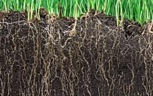 Deep Watering Grass: The Science of Watering Mature Turf