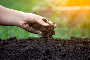 What is Organic Lawn Care
