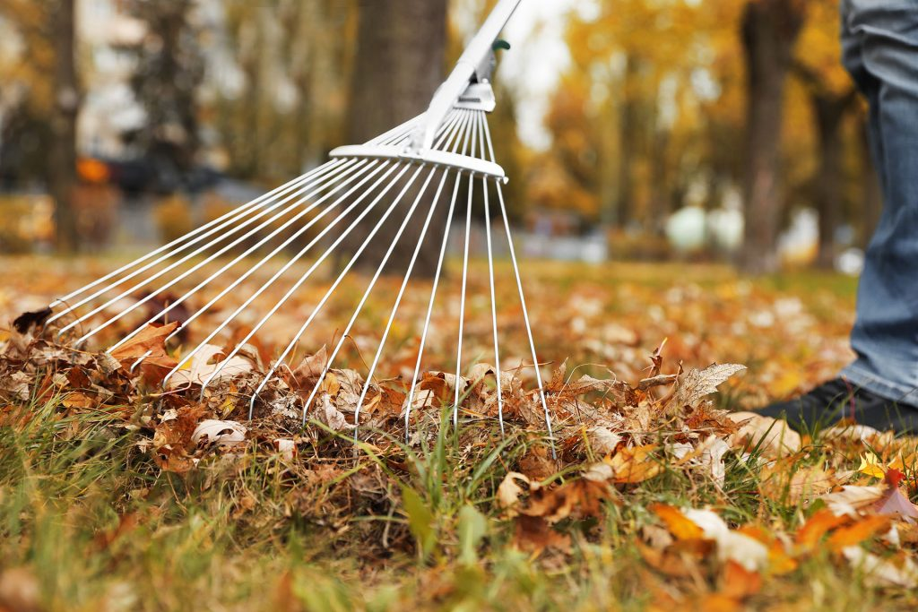 Do I Have to Rake the Leaves in My Yard This Fall?