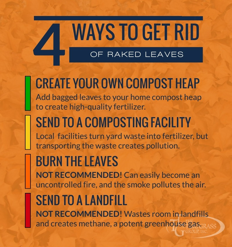 Do I Have to Rake the Leaves in My Yard This Fall [infographic]
