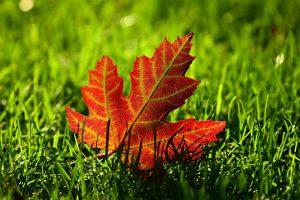 Warm-Season Grass: 6 Tips for Fall Lawn Care