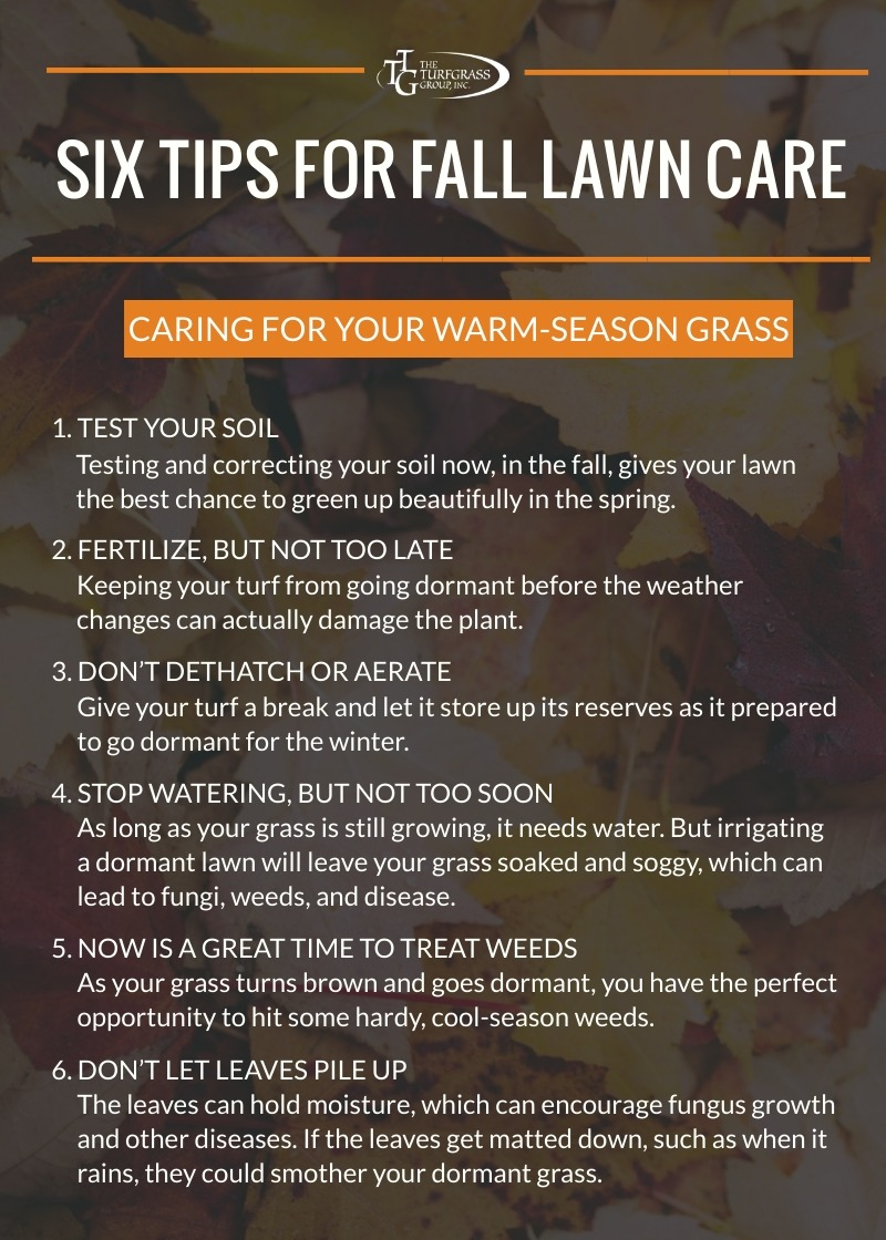 Warm-Season Grass - 6 Tips for Fall Lawn Care [infographic]