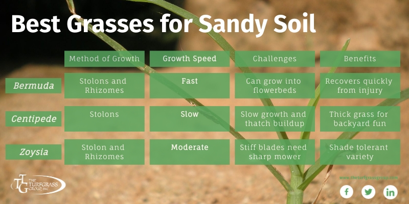 Growing Grass in Sandy Soil [infographic]