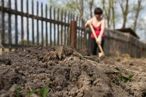 Growing a Great Lawn in Clayey Soil
