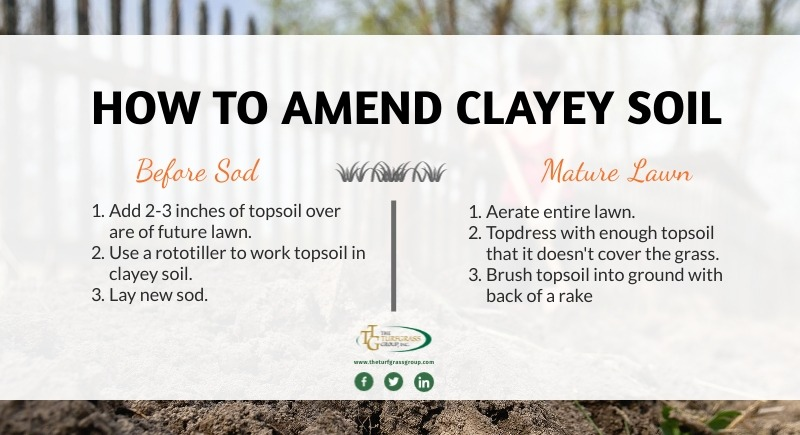 Growing a Great Lawn in Clayey Soil [infographic]