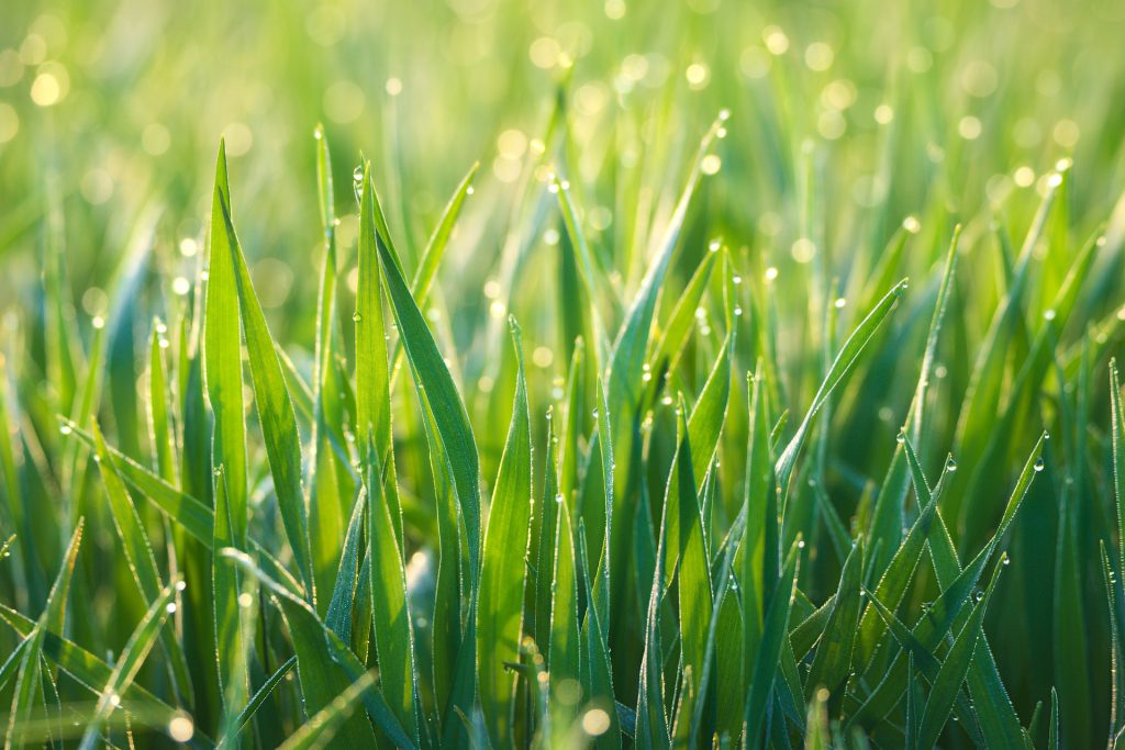 Why Mowing a Wet Lawn is Not a Good Idea