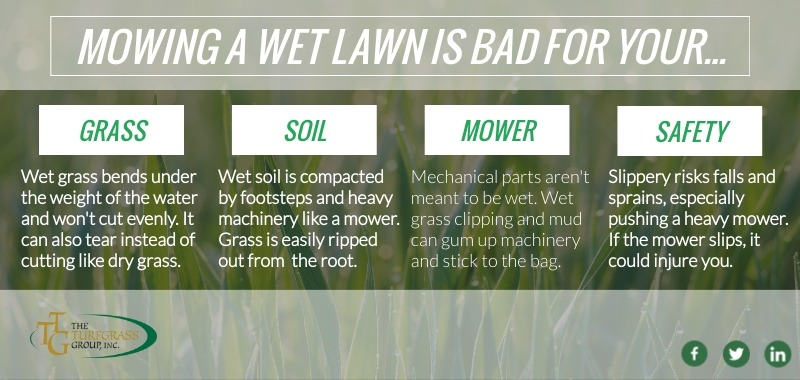 Why Mowing a Wet Lawn is Not a Good Idea [infographic]