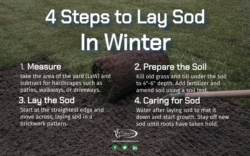Can Sod Be Laid in Winter [infographic]