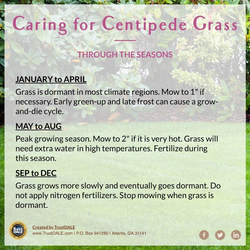 How to Care for Centipede Grass [infographic]