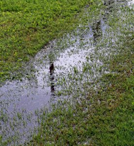 Yard Drainage Solutions for Your Lawn