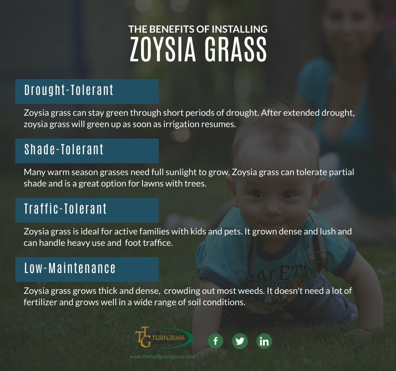 Zoysia Grass Types for a Lush Lawn [infographic]