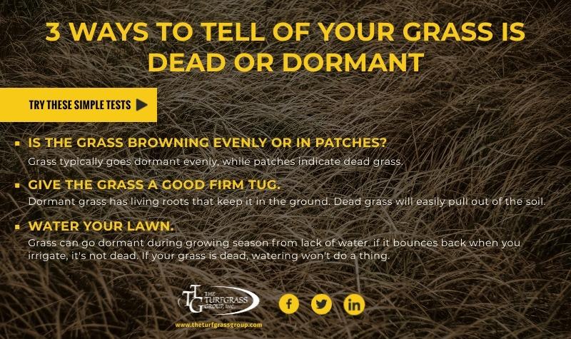 Dormant vs Dead Grass [infographic]