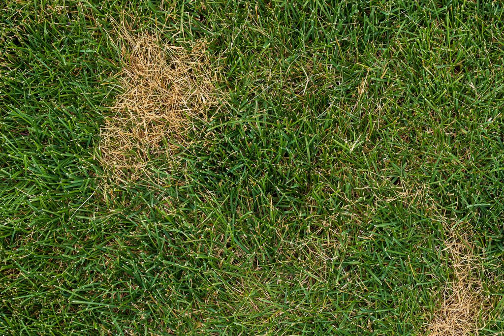 6 Things You Need to Know About Turfgrass Disease