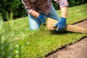 All About Bermuda Grass Sod