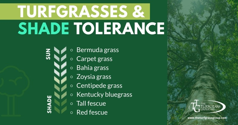 The Best Turfgrasses for Sun and Shade [infographic]