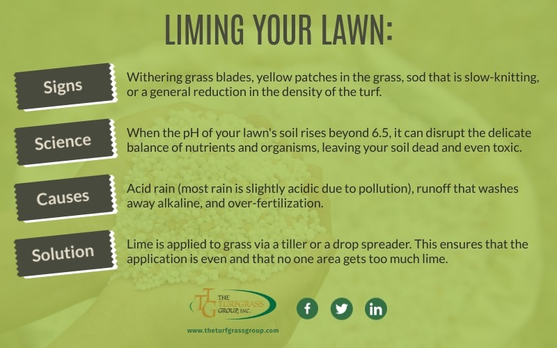 A Beginners Guide to Liming Your Lawn [infographic]