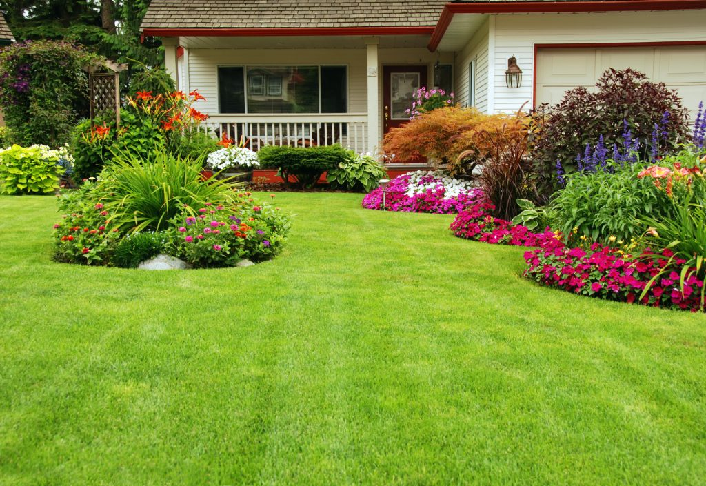 5 Tips for a Healthy Lawn