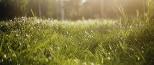 5 Tips for Summer Lawn Care