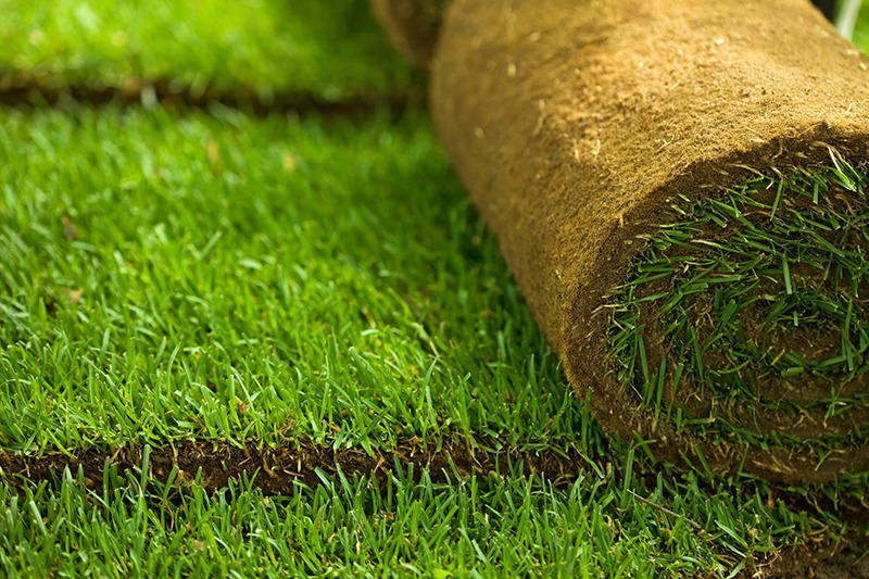 Buying Bermuda Sod For Your Lawn
