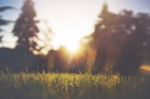 best grass for a hot climate