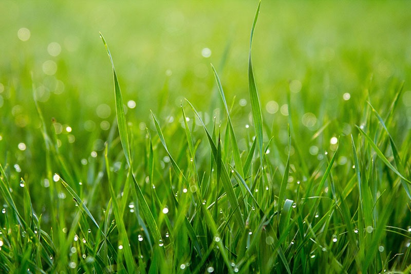 How to Keep Your Grass Green All Summer